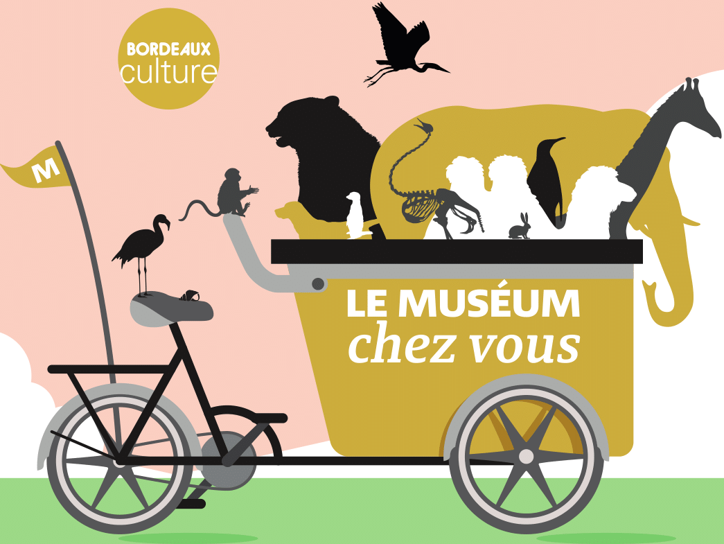The Museum comes to you is the device of the Museum of natural history of Bordeaux - Science and nature. Discover off-site workshops