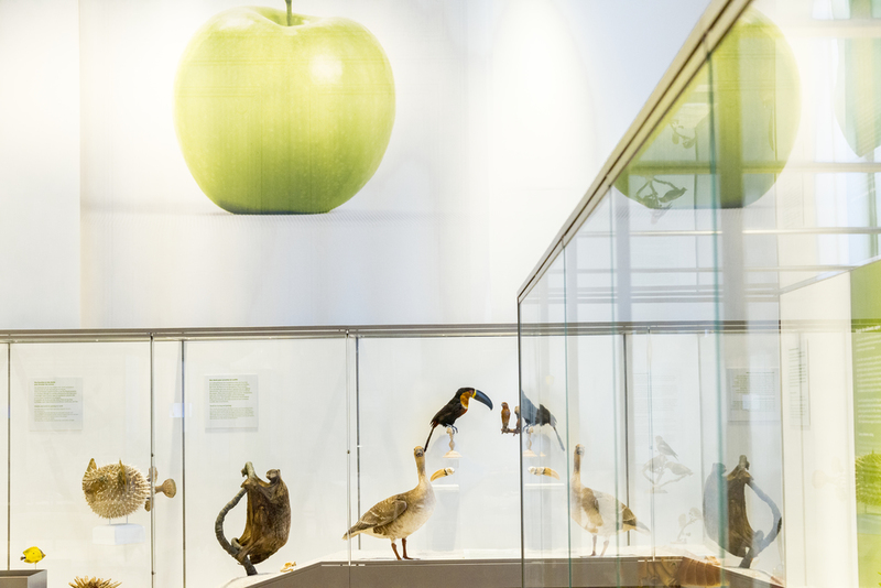 Eat me, if you can ! is one of the semi-permanent exhibition of the Museum of natural history of Bordeaux – Science and nature. At the first floor, you can discover different ways of nutrition of specimens presented.