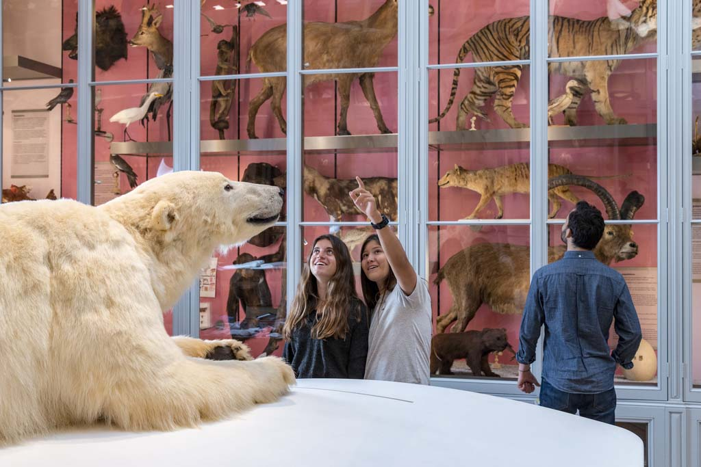 In the Museum of natural history of Bordeaux, you can discover the permanent exhibition called Nature as seen by humans. In the Souverbie Gallery, you can walk around different continents with a presentation of collections and specimens.