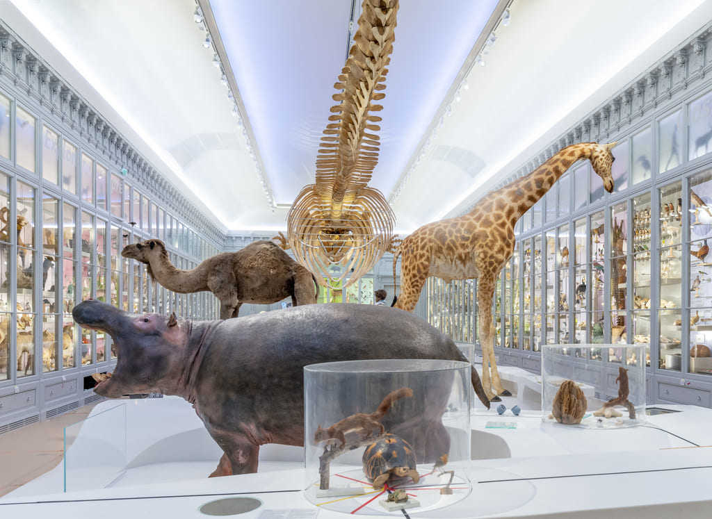 The Souverbie gallery is the main room of the permanent exhibition about the place of humans in nature. The Museum of Bordeaux – science and nature offer also semi-permanent exhibition, temporary exhibition and the Early years Museum, space totally devoted to children under the age of 6.