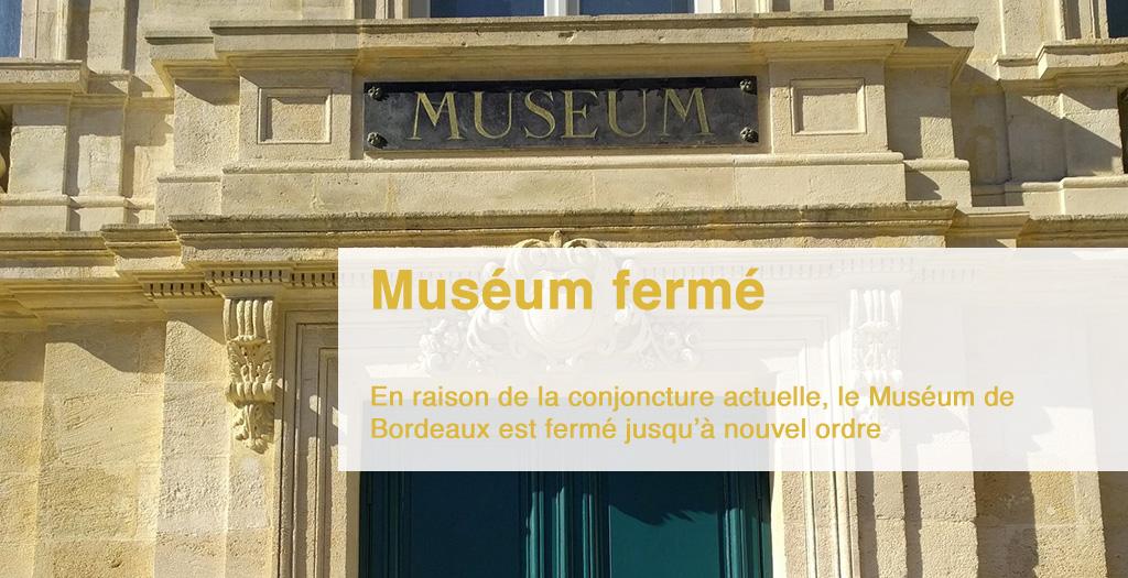 Le Muséum de Bordeaux - sciences et nature est actuellement fermé selon les directives gouvernementales